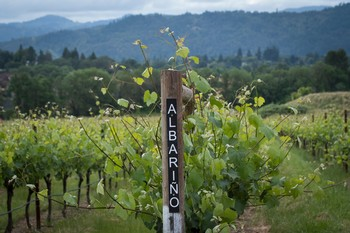 Abacela Albarino Vineyard Row